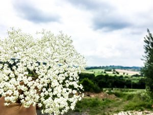 Close up of elderflower in hand near our winery