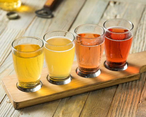 Four varieties of Lyme Bay cider in tasting cups